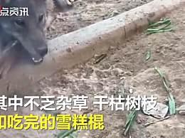 动物园内喂狼吃草女子被列黑名单