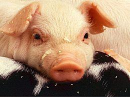 """猪价跌回""""原形"""""""