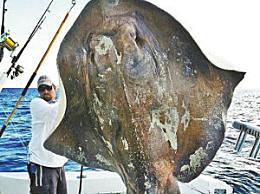 美渔民捕获700斤海 身上铠甲如铁一般坚硬