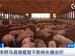 日本扑杀17万头猪