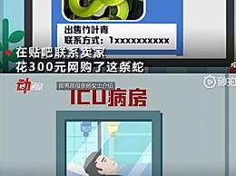 13岁男孩网购宠物蛇被咬进ICU 宠物蛇竟是竹叶青蛇