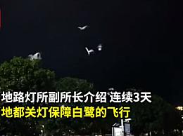 湖南一广场为候鸟连关3天射灯