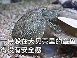 章鱼拆贝壳当房门