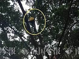 外卖小哥怕处罚爬上树不肯下来