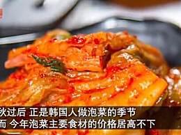 韩国大白菜涨价至62元一颗
