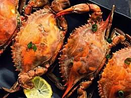 十月份吃公蟹还是母蟹