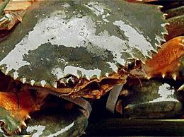 十大常见大闸蟹品种介绍