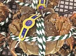 正宗阳澄湖大闸蟹的有什么标志