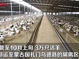 蒙古国3万只活羊隔离