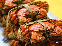 阳澄湖螃蟹最新价格表