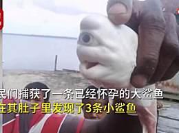 印尼发现独眼白化鲨鱼