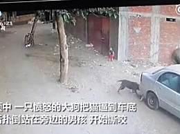 猫咪为救幼童打败大狗