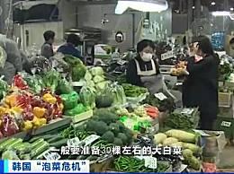 韩国1棵白菜79元