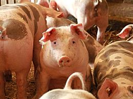 每斤猪肉多1元饲料成本