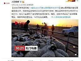 首批4000只蒙古国捐赠羊今日交付