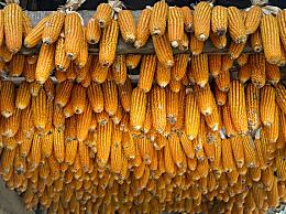 玉米价格继续上涨缺乏支撑