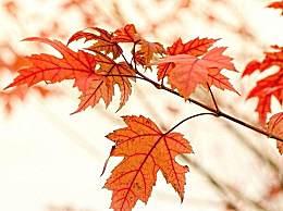 赞美描写红叶的古诗词有哪些