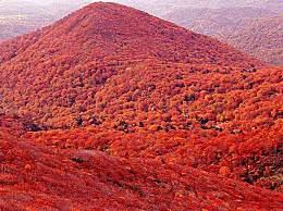赞美描写红叶的唯美心情句子