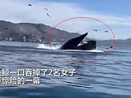 美国两女子被座头鲸吞下奇迹逃脱 美国两名皮划艇女子鲸口逃生