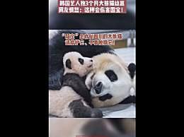 韩国艺人违规接触熊猫幼崽