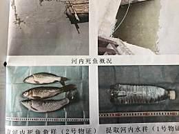 为吃鱼致2.2公里河段鱼类几近灭绝
