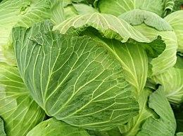 甘蓝菜怎么吃对肠胃好    推荐甘蓝菜养胃这样吃