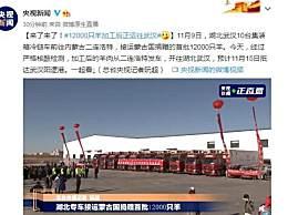 12000只羊加工后正运往武汉