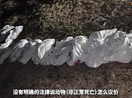 90后女孩救助的28条流浪狗全被毒死