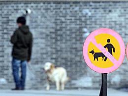 云南回应禁止遛狗第3次直接捕杀:正在研究相关情况