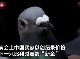 中国买家花1250万买下比利时赛鸽
