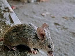 玻利维亚发现可人传人罕见病毒