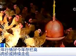 鸡肉价格降了