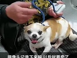 上海不牵绳遛狗将被抓拍处罚!警方启用新型智能系统抓拍