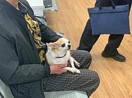 上海不牵绳遛狗将被抓拍处罚 有狗的家庭要注意了