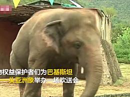 巴基斯坦唯一亚洲象到柬埔寨养老