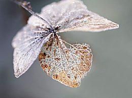 �P于冬至祝福的��美暖心句子