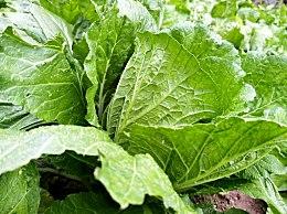 吃哪些蔬菜对菌群失衡有好处