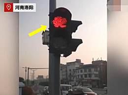 洛阳红绿灯变牡丹外形