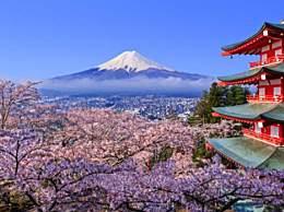 日本现千年来最早樱花季