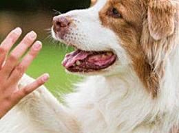 济南拟规定每户居民仅养1只小型犬:遗弃犬只罚款2000元