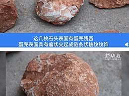 江西一处工地挖出6600万年前恐龙蛋化石
