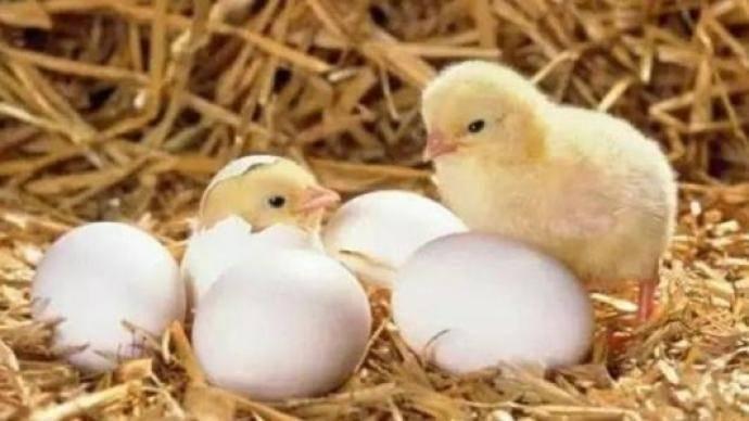 打新冠疫苗能吃鸡蛋吗?