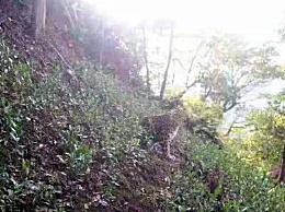 杭州出逃的第二只豹子已被狗咬死