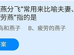 """成语""""劳燕分飞""""常用来比喻夫妻、情侣别离,""""劳燕""""指的是"""