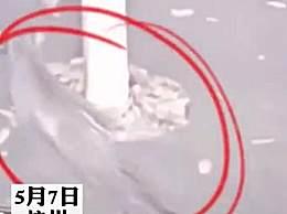 豹子现身杭州小区 系从动物园出逃