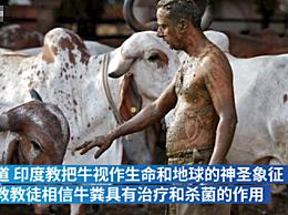 印度医生警告牛粪疗法无效