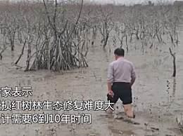 广西北海红树林大片消失