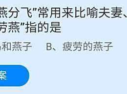 """成语""""劳燕分飞""""常用来比喻夫妻、情侣别离,""""劳燕""""指的是?"""