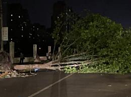 江苏南通遭遇大风致11人死