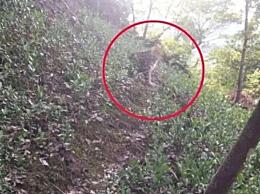 杭州第3只豹子去哪儿了